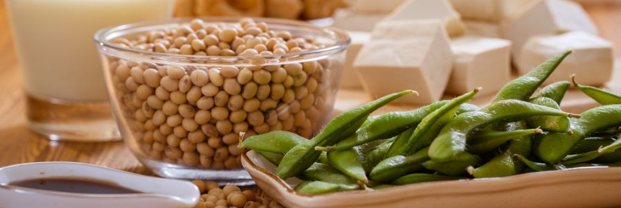 Soy Foods and Cancer